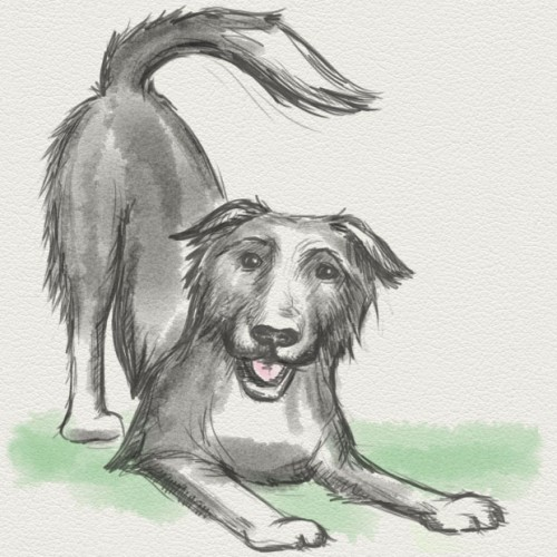 This is a simple quick sketch for the Keep The Tail Wagging website header.