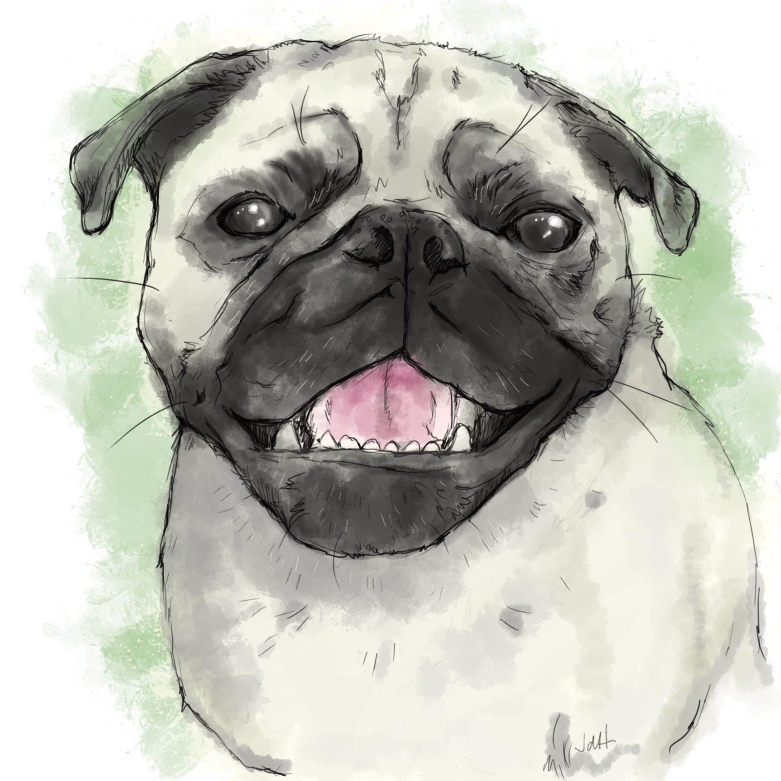 Dog illustration of Pug.